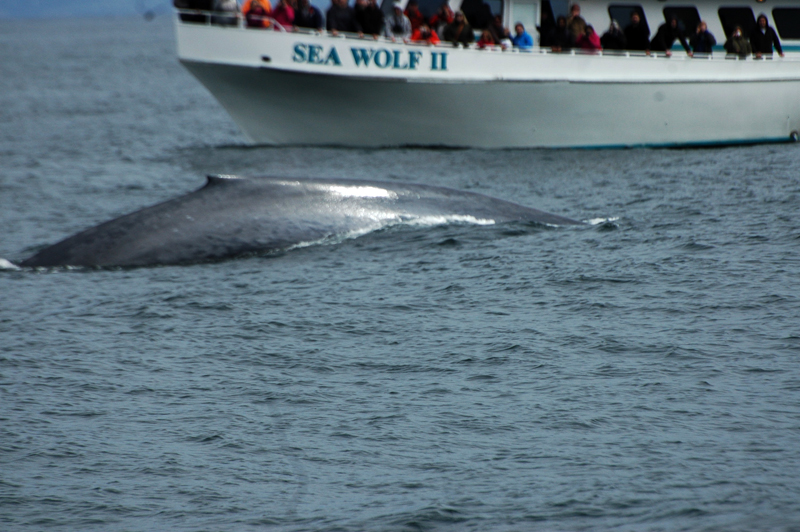 There be whales here!